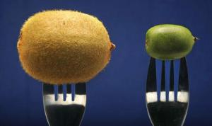 Big-plans-for-France-s-mini-kiwi-fruit_article_top