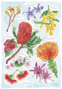 native flower_905